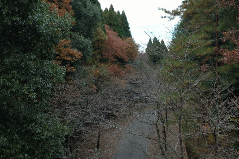 昭和の森公園(1-17)