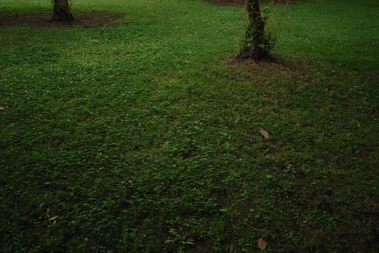 6月のナイスミドリ ( another green XXIII )