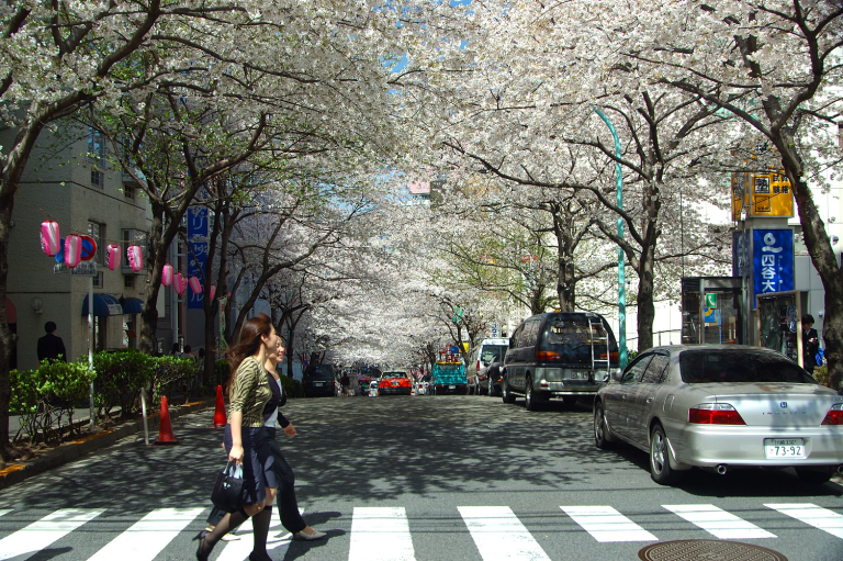 ジョナサン~の前から 渋谷・さくら通り