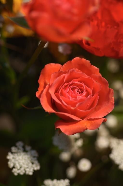 母の日の花 II