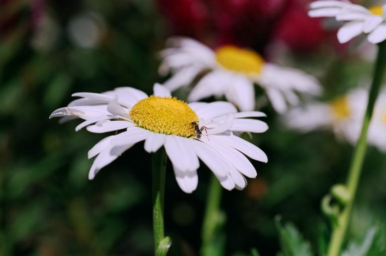 花とありんこ(F80D + SUPERIA 100)