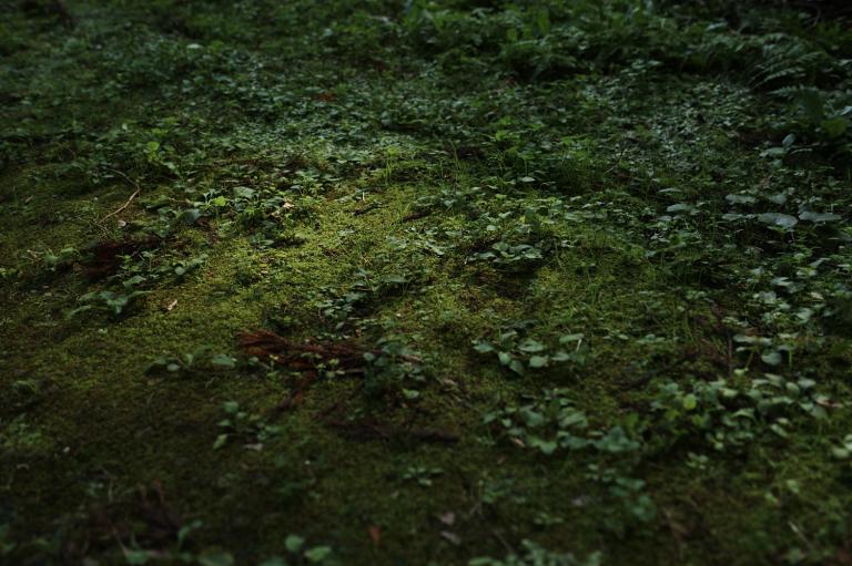 森の中で・・
