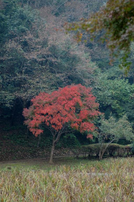 泉自然公園 1