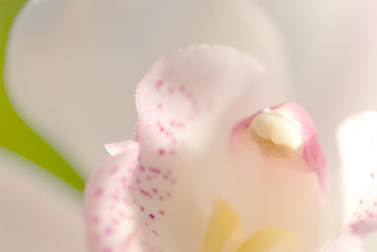 flower – macro