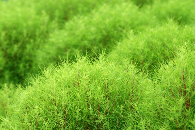 夏の終わりを告げる緑 ( another green XXX )