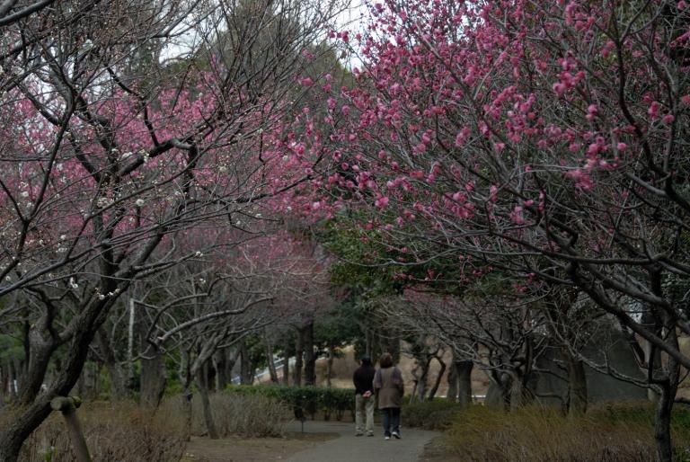 梅 青葉の森公園