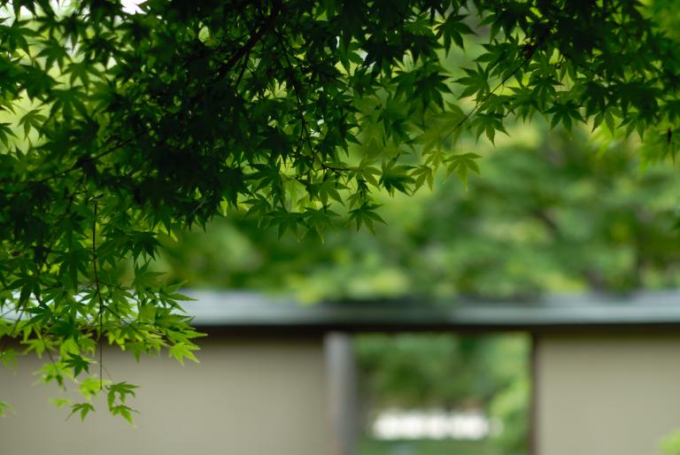 6月の緑 ( another green XI )
