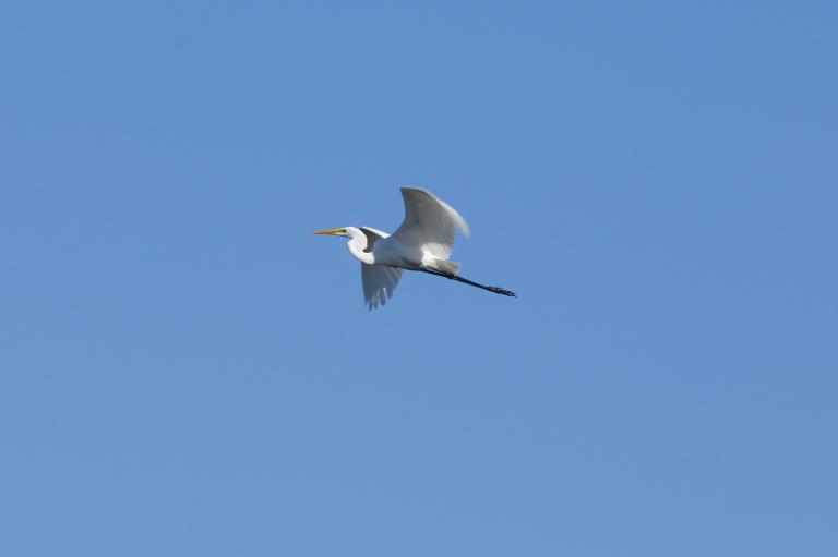 an existing confirmation flight object ( シラサギ )