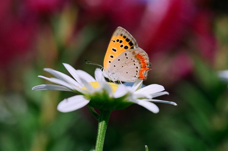 花と蝶(F80D + SUPERIA 100)