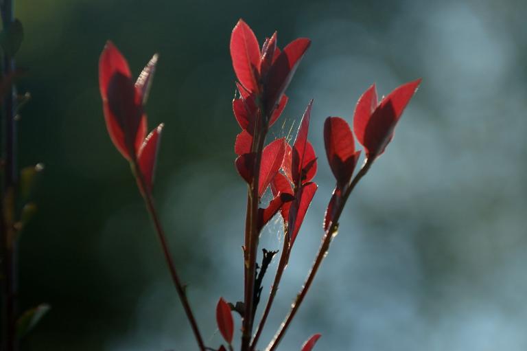 赤い葉のつづき