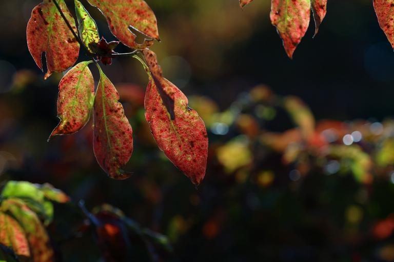 背景が賑やかな赤い葉