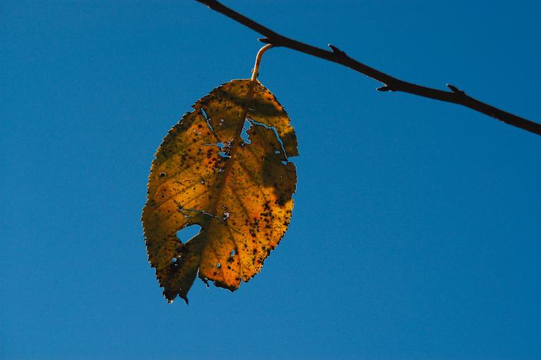 空の明度を落とした黄色い葉