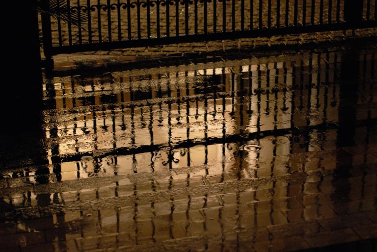 雨だにゃぁ ( Ai Nikkor 50mm F1.2S )