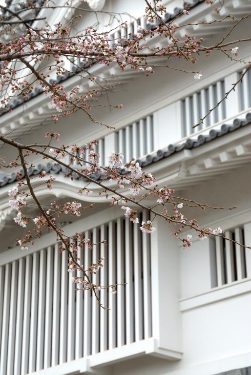 亥鼻公園(千葉城)の桜