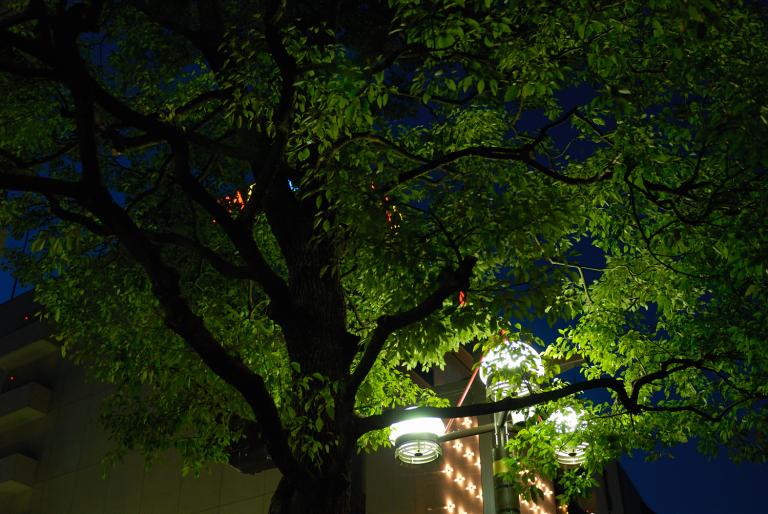 夕刻の街路樹