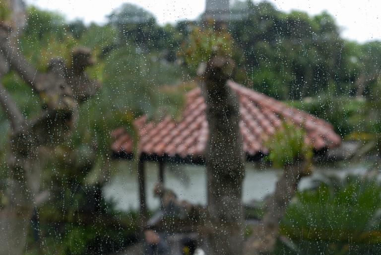 雨、雨、降れ降れ 2pics