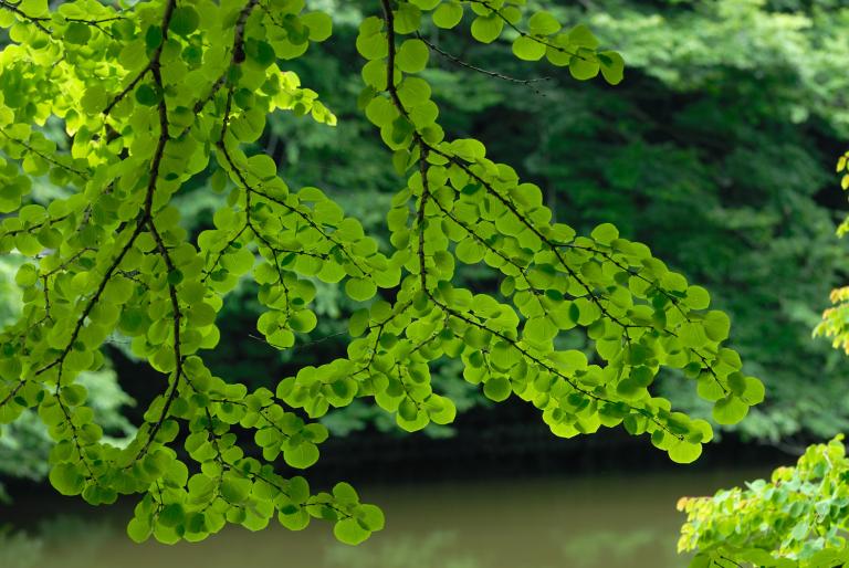 続・6月の緑 ( another green XIX )