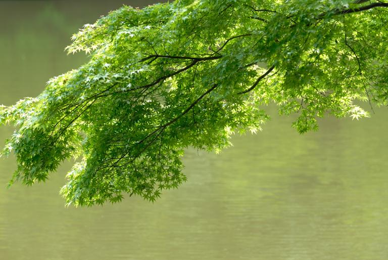続・6月の緑 ( another green XVI )