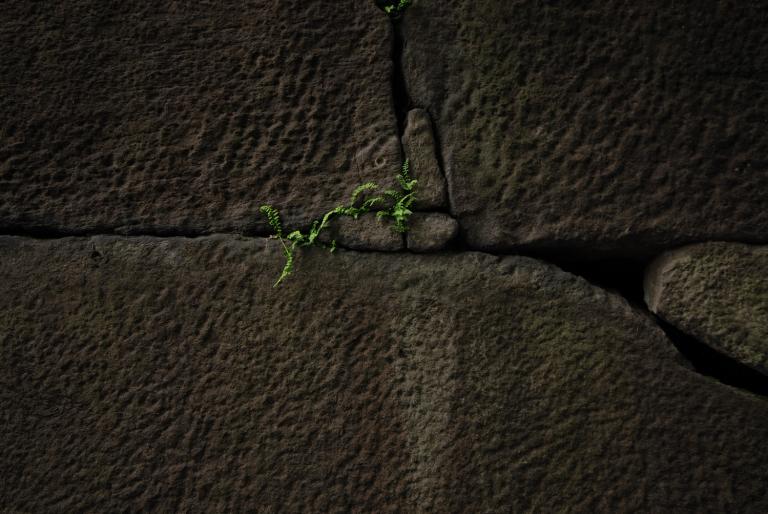 6月のナイスミドリ ( another green XXII )