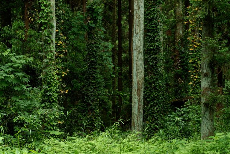 森の中を歩く2
