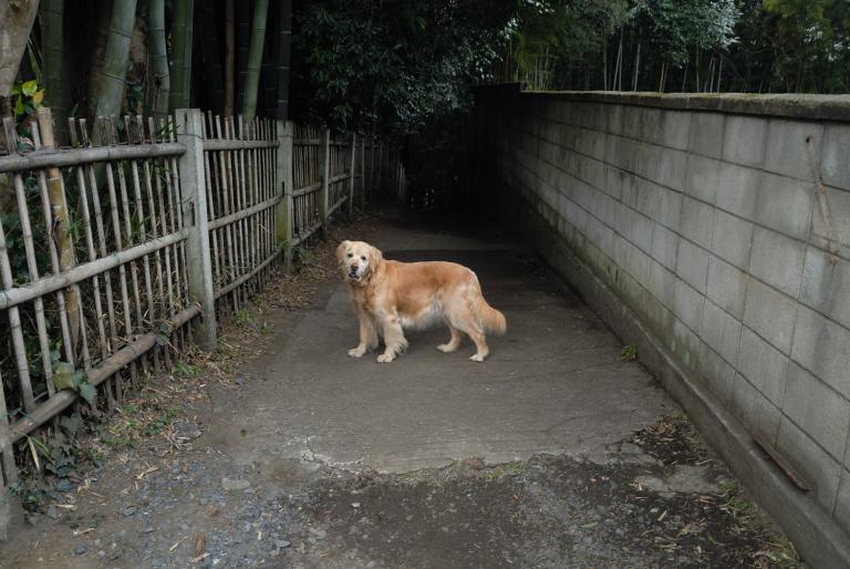 s n a p ( 耄導犬? )