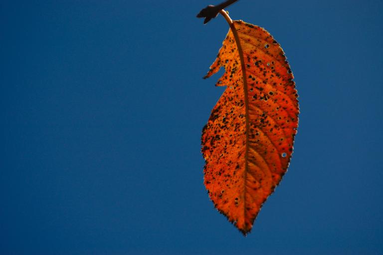 空の明度を落とした赤い葉