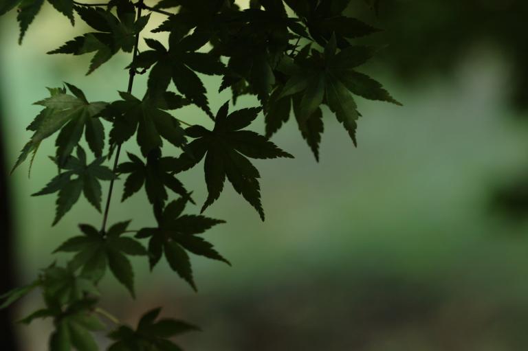 緑が恋しい(1-4)