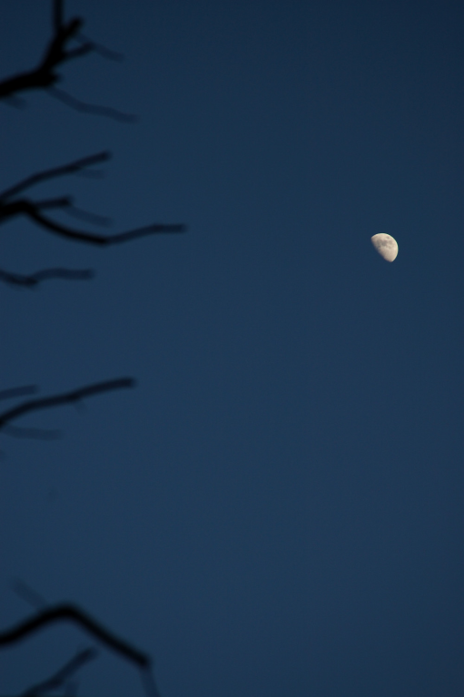 moon@8.1,06
