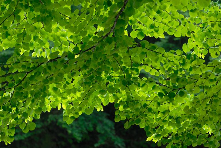 続・6月の緑 ( another green XX )