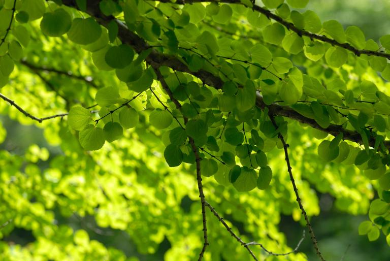 続・6月の緑 ( another green XVII )