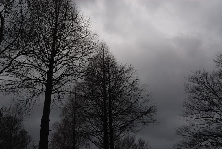 s n a p ( 雨の日の公園 )